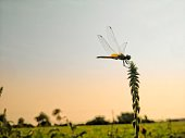 One day at me going to forest. That time I show beautiful dragonfly insects.