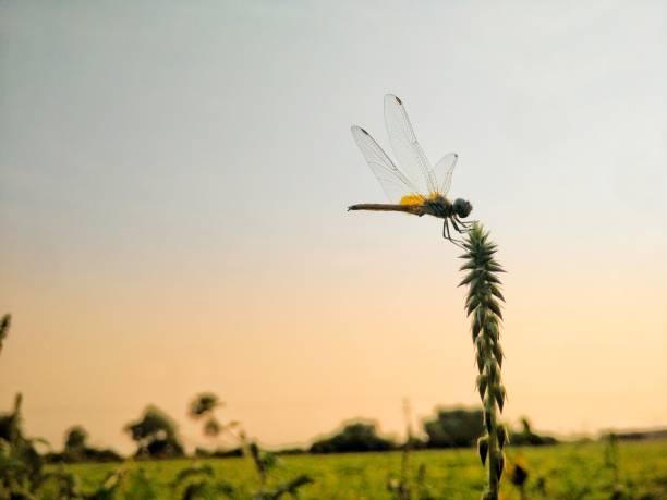 Dragonfly picture id1124743875?b=1&k=6&m=1124743875&s=612x612&w=0&h=db25qzowlep80a715eg4knrhhy2uqdlodmkocrqdchm=