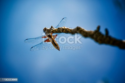 Dragonfly on a blue background