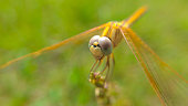 Beautiful dragonfly sitting in the garden close to shoot.