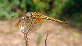 Wildlife insects dragonfly.