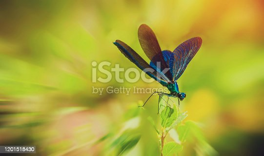 Dragonfly sitting on a green branch