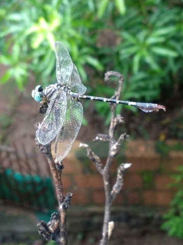 A beautiful image of dragonfly