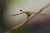 Close up shot of a dragon fly.