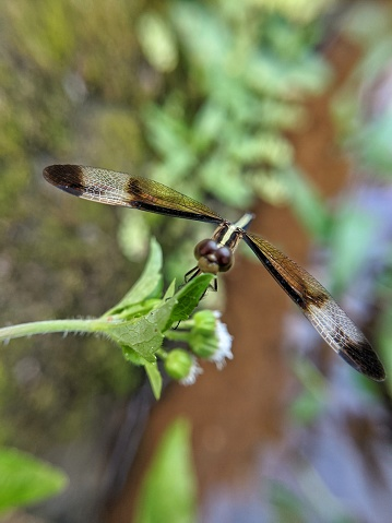 Dragonfly On Brach