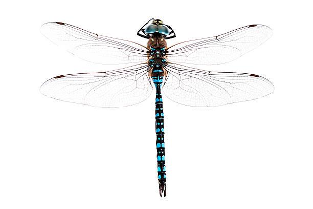 Dragonfly picture id157436034?b=1&k=6&m=157436034&s=612x612&w=0&h=ezwxyp wccp8ish534b65ow7nehiup6skoopvwsjfje=
