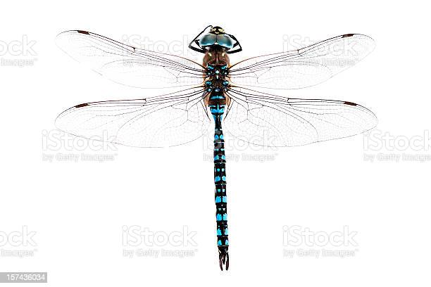 Free dragonfly Images, Pictures, and Royalty-Free Stock