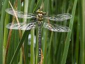 New born Dragonfly.