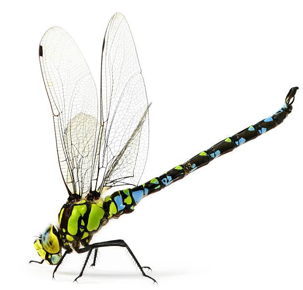 Dragonfly picture id182851950?b=1&k=6&m=182851950&s=612x612&w=0&h=xcv 8qa3jizauxuvkpibbcttuqq6c76nabitzpqxiic=
