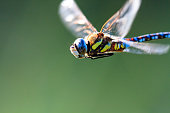 Macro shot of a dragonfly flying