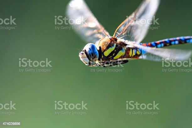 Dragonfly picture id474026656?b=1&k=6&m=474026656&s=612x612&h=cnv0rd06bp59w6k7gaxmfn0wu0 v ggqs mliy20vem=