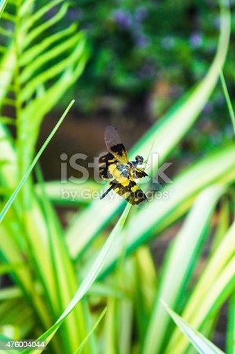 istock Dragonfly 476004044