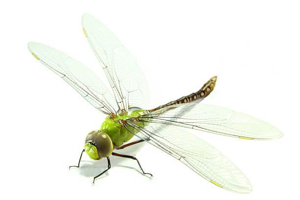 Dragonfly picture id516447820?b=1&k=6&m=516447820&s=612x612&w=0&h=jh6sun djgfrmgodu4kiulgrfeyw418lska4k6fe8og=