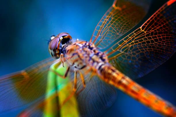 Dragonfly picture id638367894?b=1&k=6&m=638367894&s=612x612&w=0&h=pnhyaf9lmto 1cawji4sij8ayfx2uyuosi nnjbwl88=