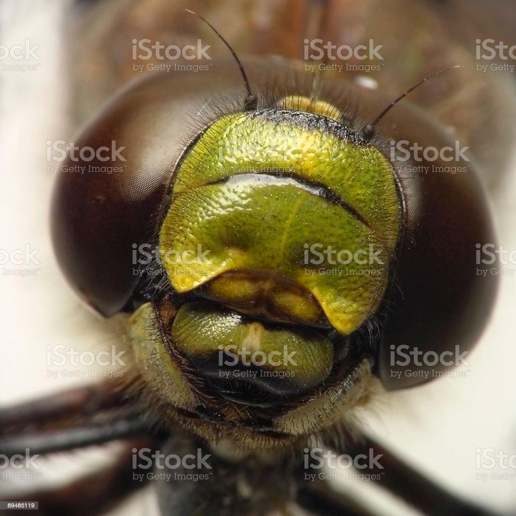 dragonfly royalty-free stock photo