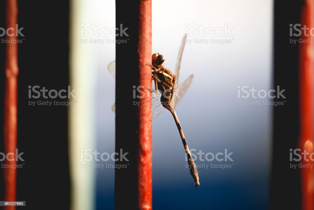 Libelle – Foto
