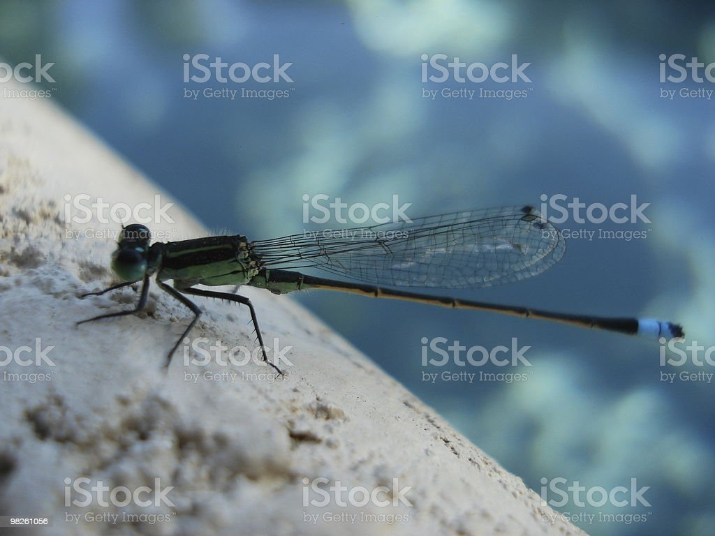Libellula foto stock royalty-free