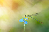 Dragonfly resting on blooming flower