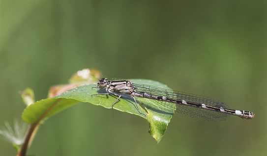 Dragonfly Resting Stock Photo - Download Image Now