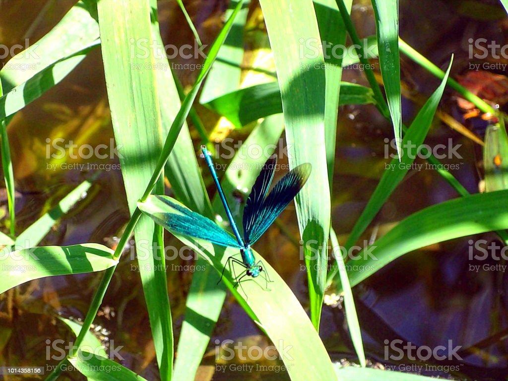 Libelle Ruht Sich aus – Foto