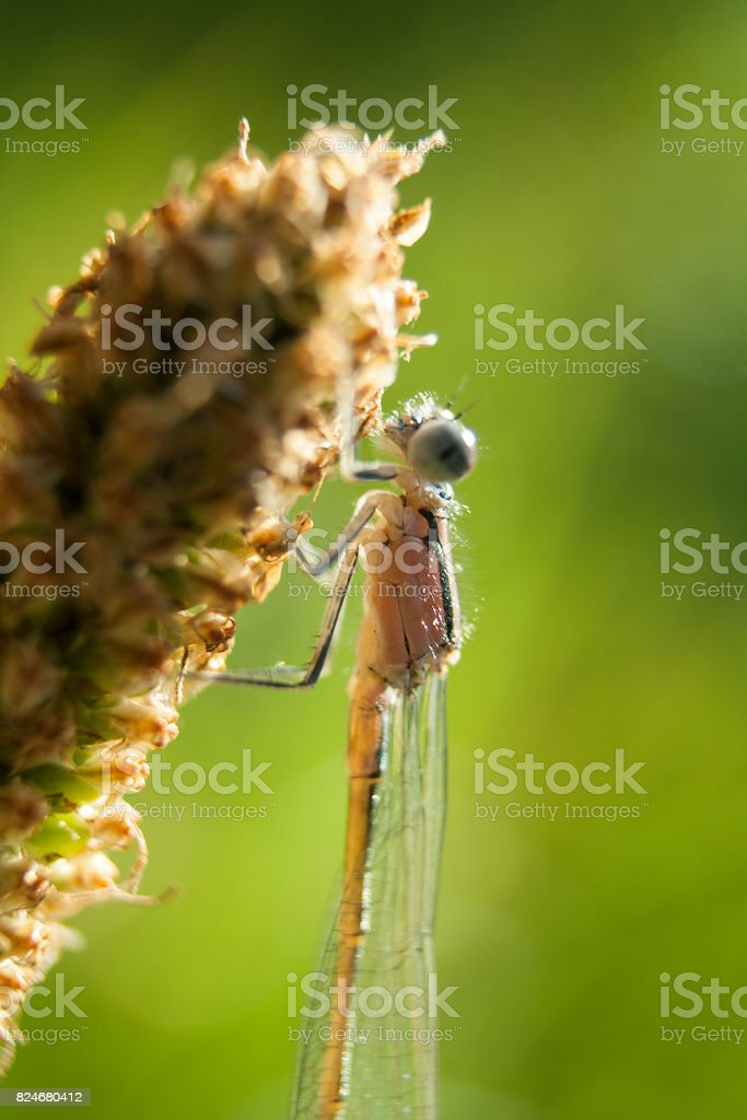 A dragonfly sits on the core of a flower stock photo
