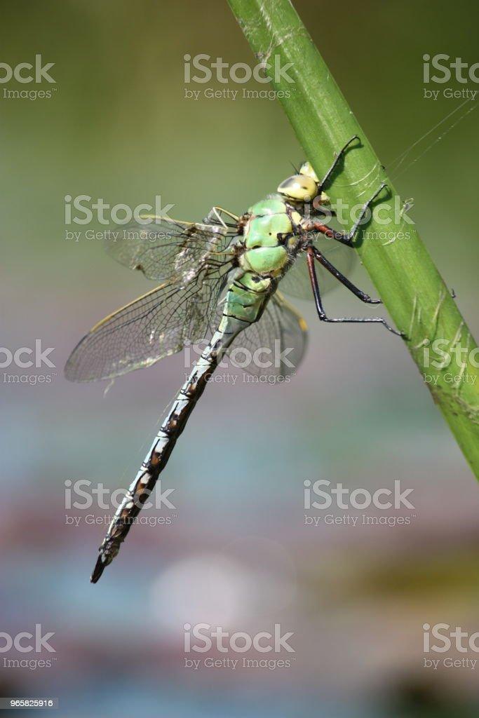 Dragonfly zittend op een blad - Royalty-free Blad Stockfoto