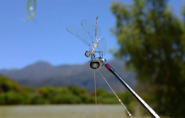 Libelle sitzt auf fishing rod – Foto