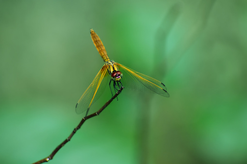 Dragonfly sitting on tree branch with green smooth background