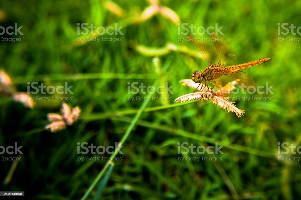 Dragonfly Special nature stock photo