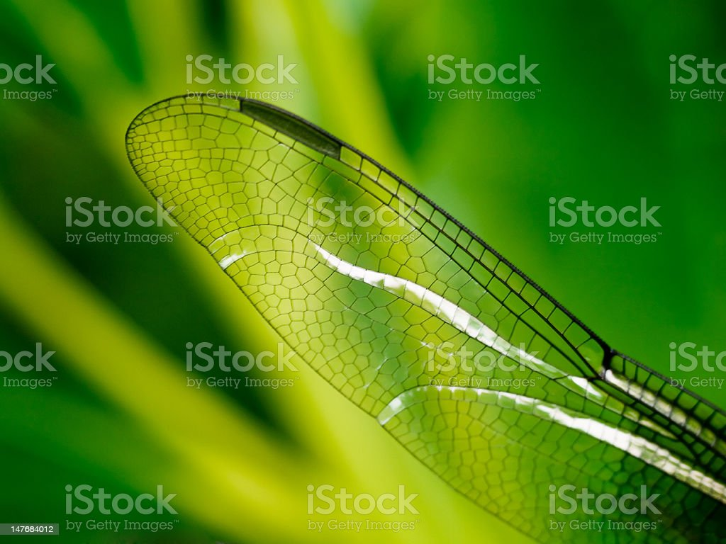 Dragonfly wing royalty-free stock photo