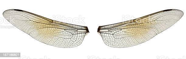 Dragonfly wings picture id157186821?b=1&k=6&m=157186821&s=612x612&h=yb4trnjymdl7lvsj3yiqanh0b53exqs9quh4d4wakc8=