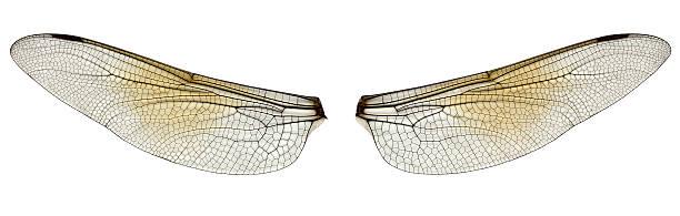 Dragonfly wings picture id157186821?b=1&k=6&m=157186821&s=612x612&w=0&h=jsohkd0egsat6ye5jbexakc5tgrjbnj66gdqph szsg=