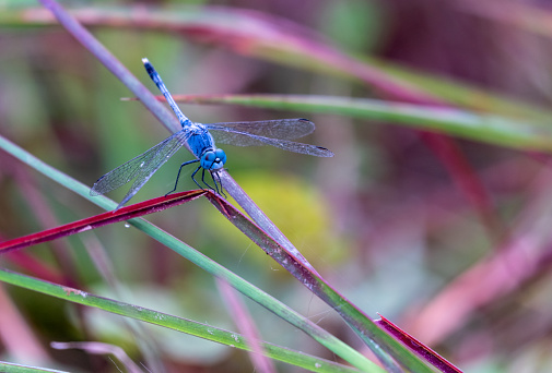 A dragonfly flies onto a grass in the daytime