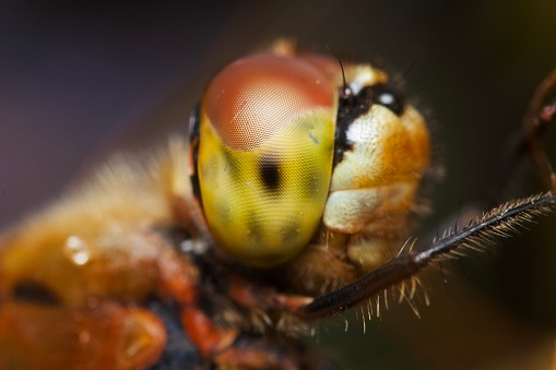 Extreme close up of a dragonfly's eye