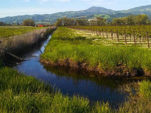 drainage und bewässerung canal alexander valley healdsburg, kalifornien - robert weinberg stock-fotos und bilder