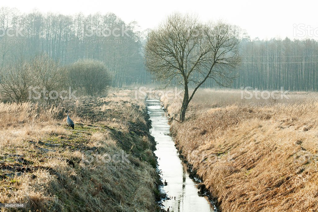 drainage channel running through a meadow and forest stock photo