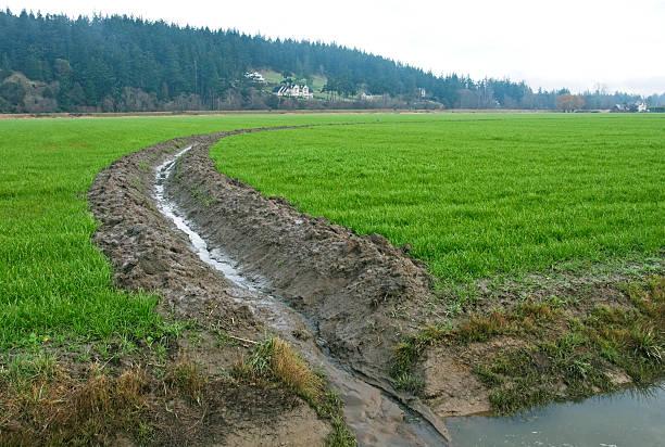 Gemeinsame Drainage Landwirtschaft - Bilder und Stockfotos - iStock #RR_85