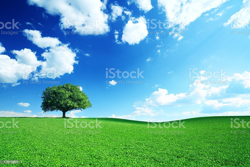 Dramatic Blue Sky and Meadow - 21Mpix - Royalty-free Agricultural Field Stock Photo
