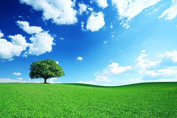 Dramatic Blue Sky and Meadow - 21Mpix stock photo