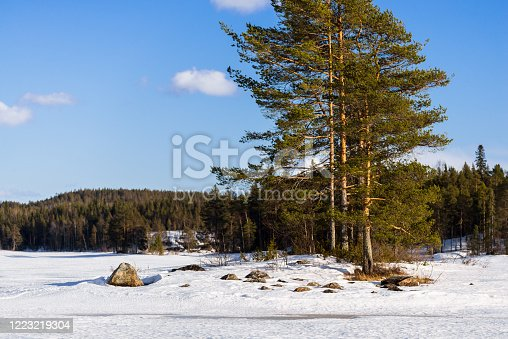 istock Dramatic blue sunset sky above the snow-covered frozen Kuito lake, coniferous forest in the background. Evergreen trees close-up. Storm clouds. Karelia North, Lapland 1223219304