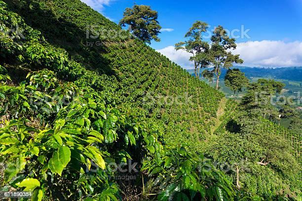 Dramatic Coffee Landscape Stockfoto en meer beelden van Aangelegd