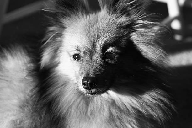 Dramatic Dog stock photo