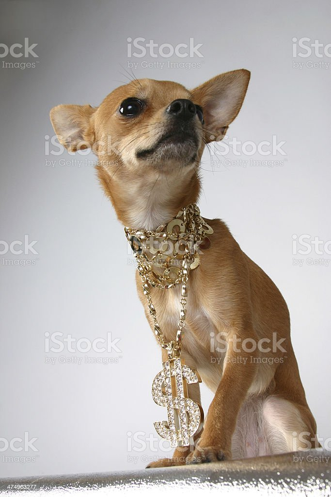 Dramatic Dog stock photo
