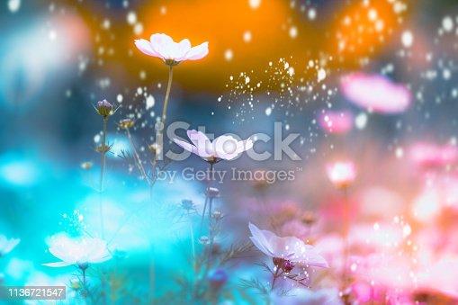 istock dramatic flower background 1136721547