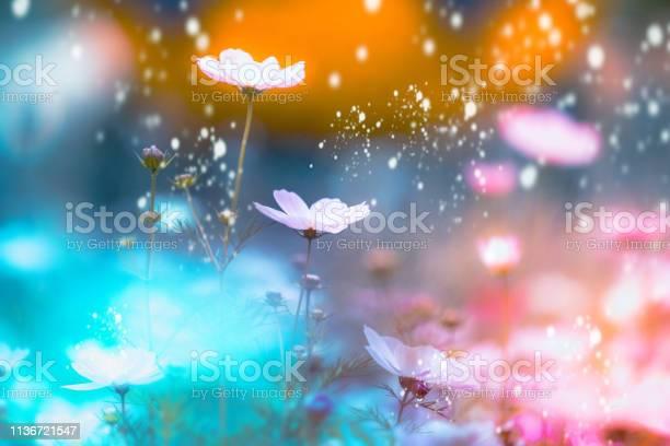 Photo of dramatic flower background