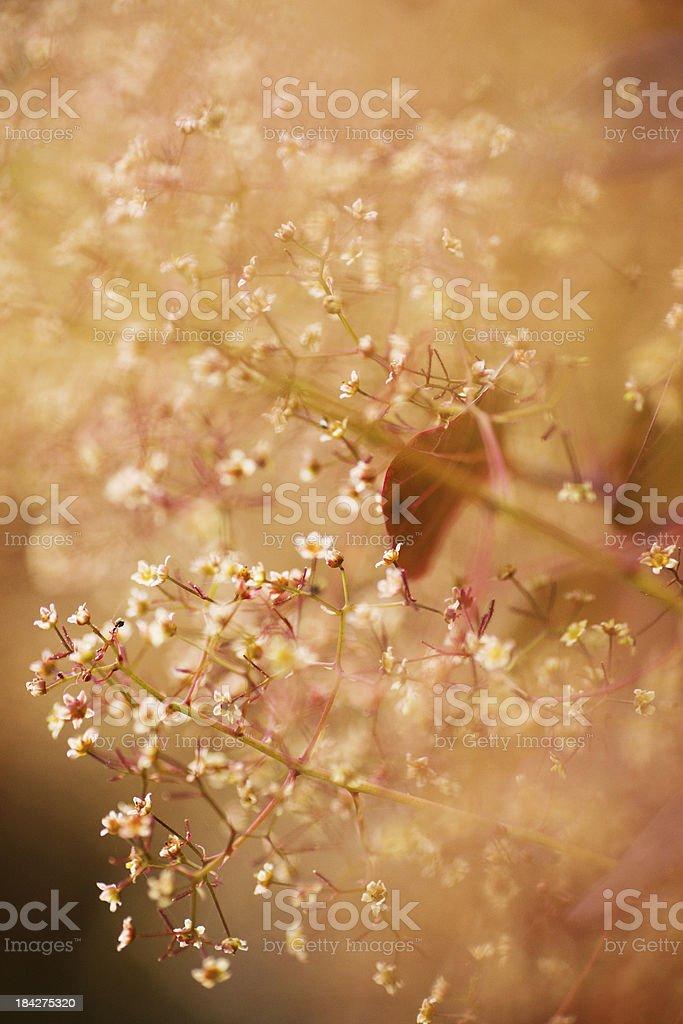 Dramatic flower macro stock photo