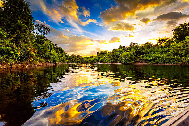 Dramatic landscape on a river in the amazon state Venezuela Dramatic colorful landscape on a river in the amazon state Venezuela at sunset amazon river stock pictures, royalty-free photos & images