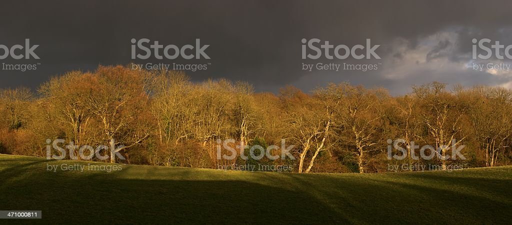 Dramatic light on woods royalty-free stock photo