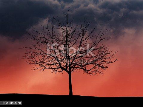 Dramatic night cloudy sky. Sprawling tree silhouette. Halloween background.
