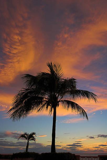 Dramatische roten Wolken mit zwei Palmen – Foto